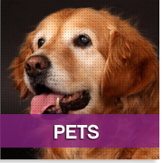 Pet Photography Gallery